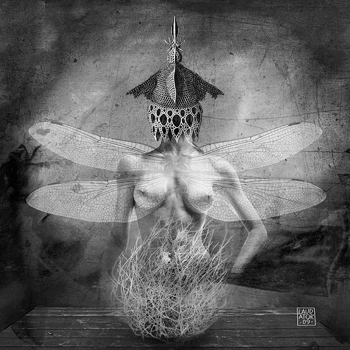 The flight of the dragonfly Série Daydream, assemblage d'images, format 60x60 cm
